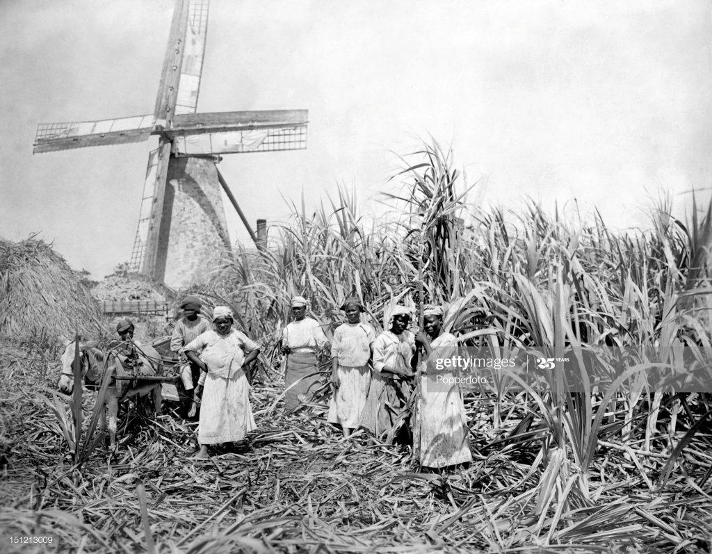 Плантация сахарного тростника с полевыми работниками, Барбадос, 1910 г
